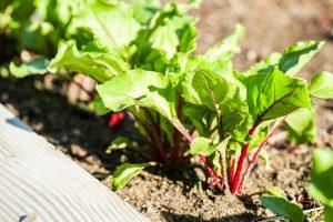 Jardinage biologique - Holbec
